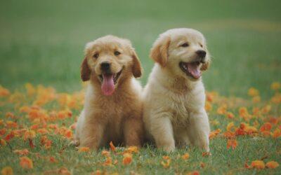 Assurance pour chien : découvrez notre guide pour bien la choisir