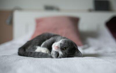 Frais vétérinaires chat : découvrez notre guide complet