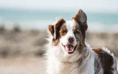 Comment diminuer les frais vétérinaires de son animal ?