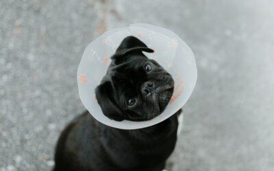 Vaccins chien : quand et à quel prix ?